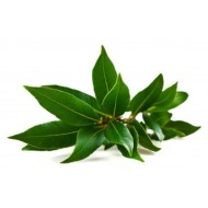 Ho Leaf (Cinnamomum Camphora)