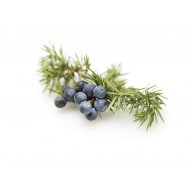 Juniperberry (Juniperus Communis)