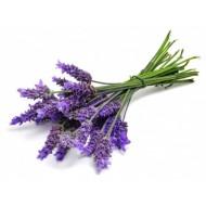 Lavender Bulgarian (Lavendula Angustifolia)
