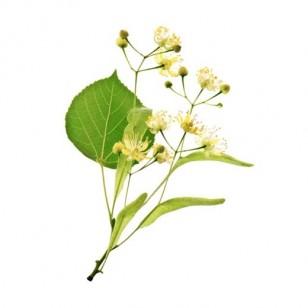 Linden Blossom (Tilial Vulgaris)