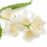 Neroli Flower (Citrus Aurantium)