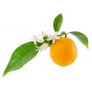 Neroli (Citrus Aurantium)