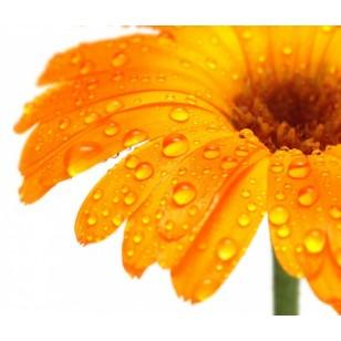 Orange Flower (Neroli)