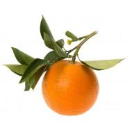 Petitgrain (Citrus Aurantium)