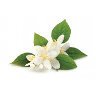 Jasmin Floral Water
